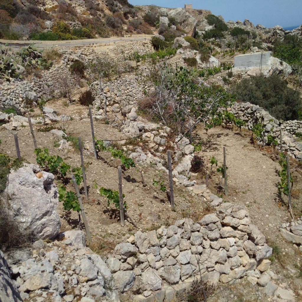 Agriculture Daħlet Qorrot