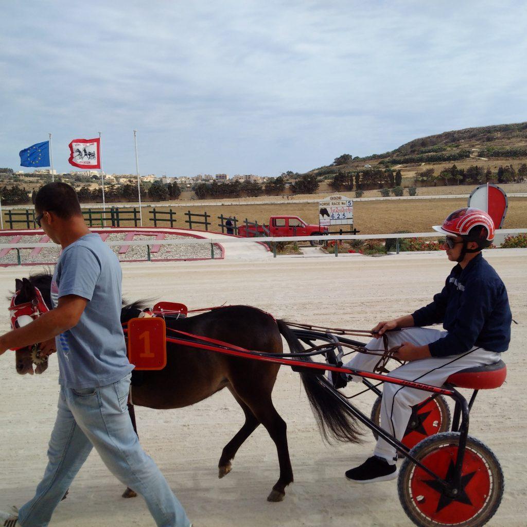 Joanna Shetland horse