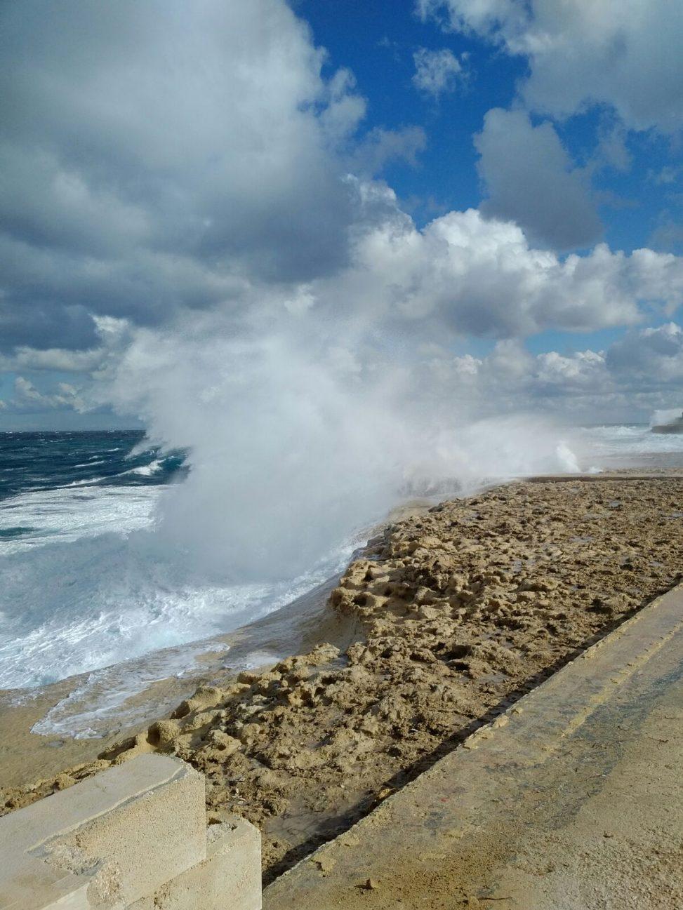 Gozo nature show